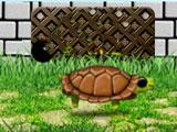 Сражения черепах