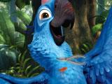 Рио: Голубчик поранился