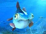 Джордж - невезучая рыбка